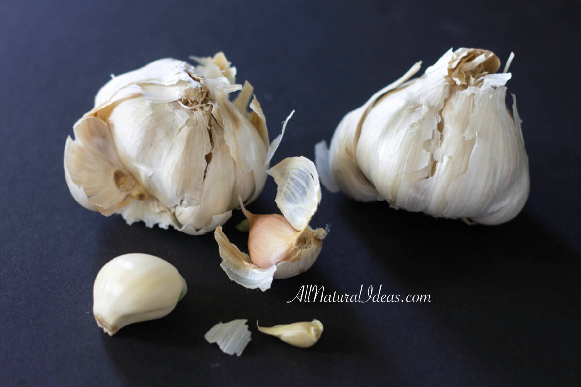 Garlic Health Benefits and Medicinal Properties