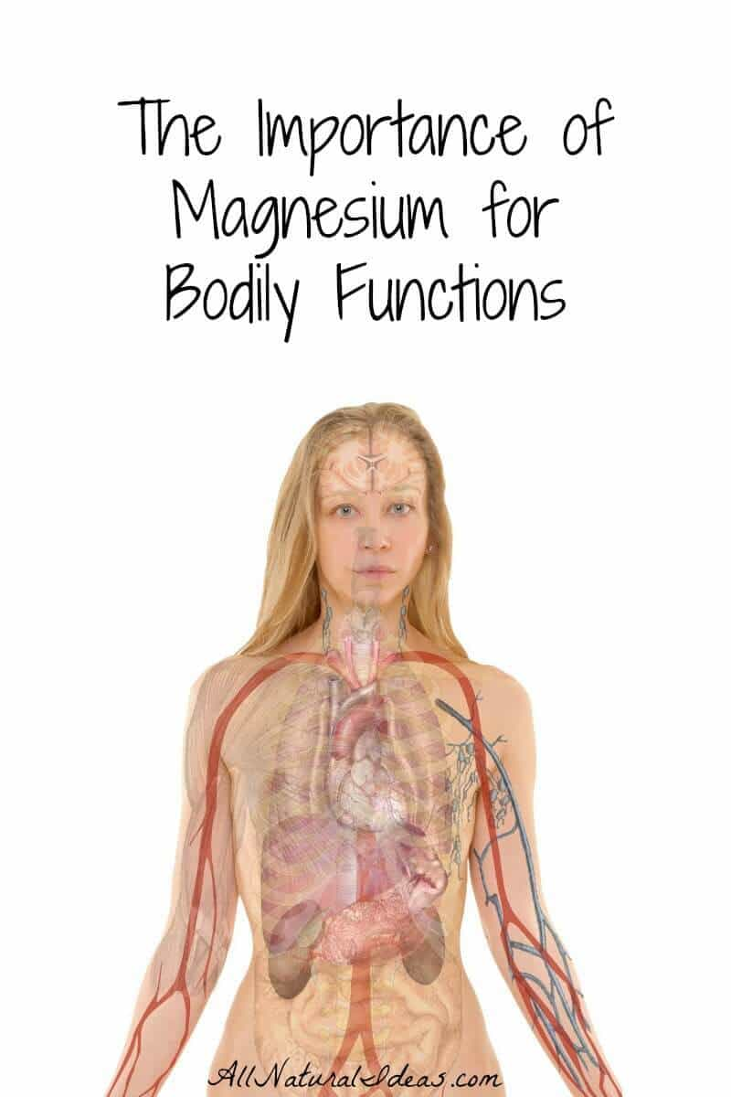 The importance of magnesium in the human body is that it's needed for vital functions. Magnesium deficiency affects three main functional areas.
