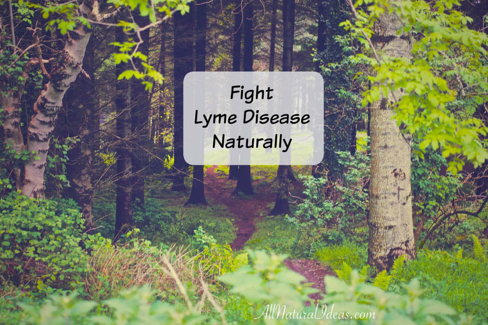 Are you looking to fight Lyme disease naturally? I had to fight Lyme too many times and I looked to natural remedies for a full recovery.