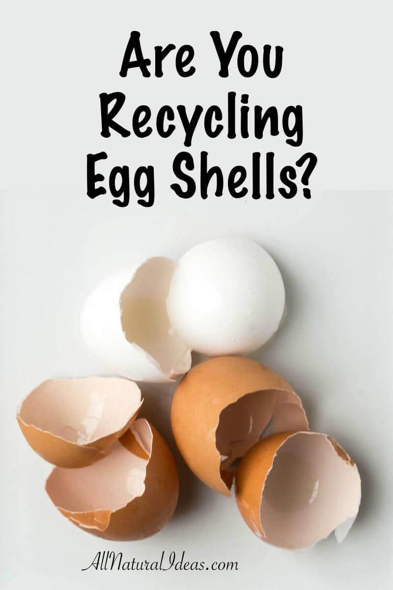Eating a lot of eggs recently? Looking to not be wasteful? Recycling egg shells is an excellent eco-friendly way to limit waste!