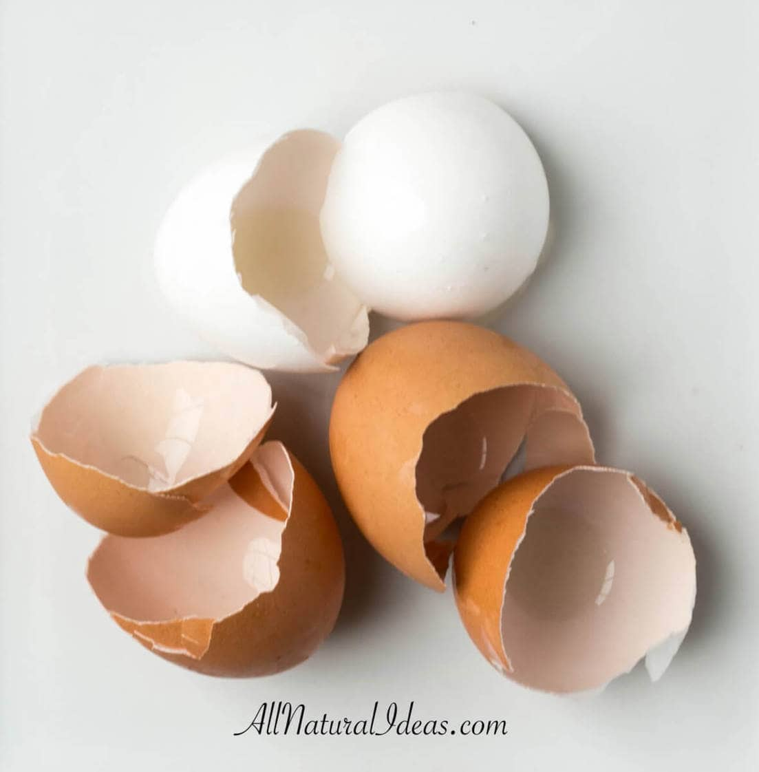 Recycling egg shells