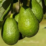 Reasons to Eat Avocados – Health Benefits