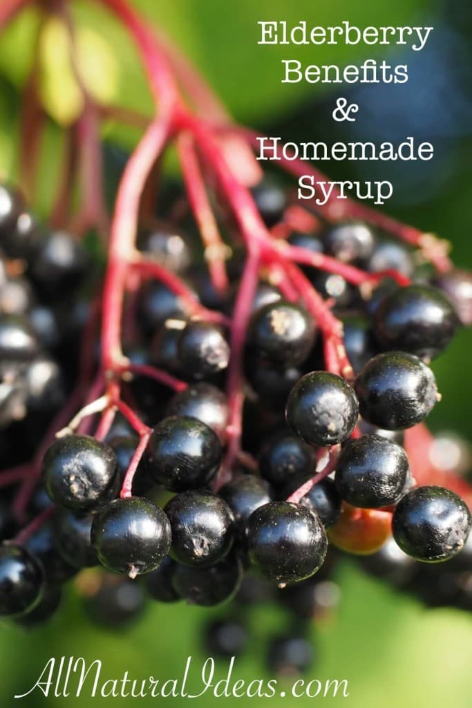 How to Treat Colds With Elderberry pics