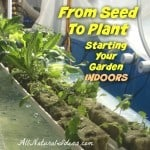From Seed to Plant: Starting Your Garden Indoors