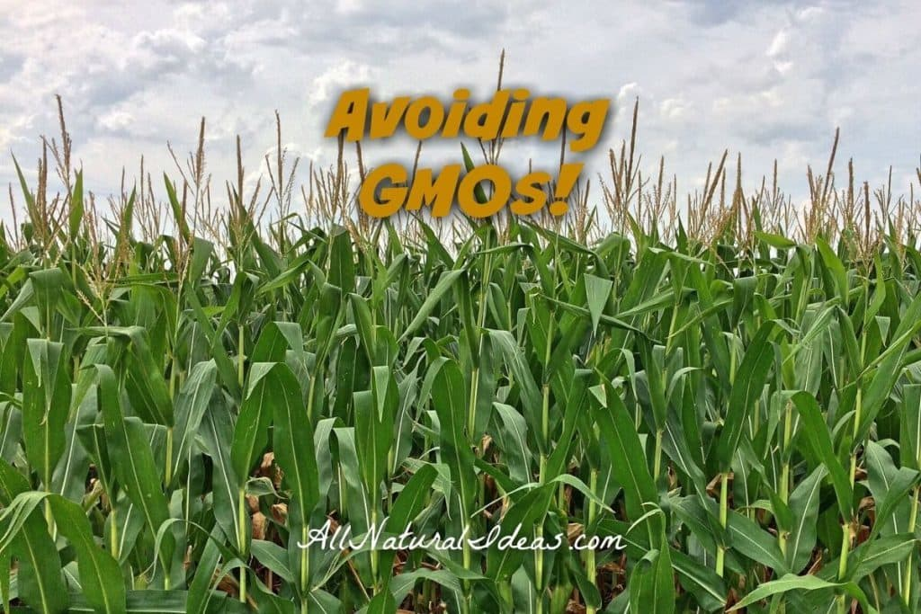 Not sure what genetically modified organisms are? Looking to keep engineered foods out of your diet? Learn how avoiding GMOs can be beneficial! | allnaturalideas.com
