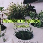 Indoor Herb Garden: The Essentials