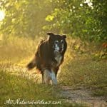 Holistic Cancer Treatment for Dogs to Prolong Life