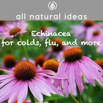 Echinacea Benefits for Cold & Flu Relief