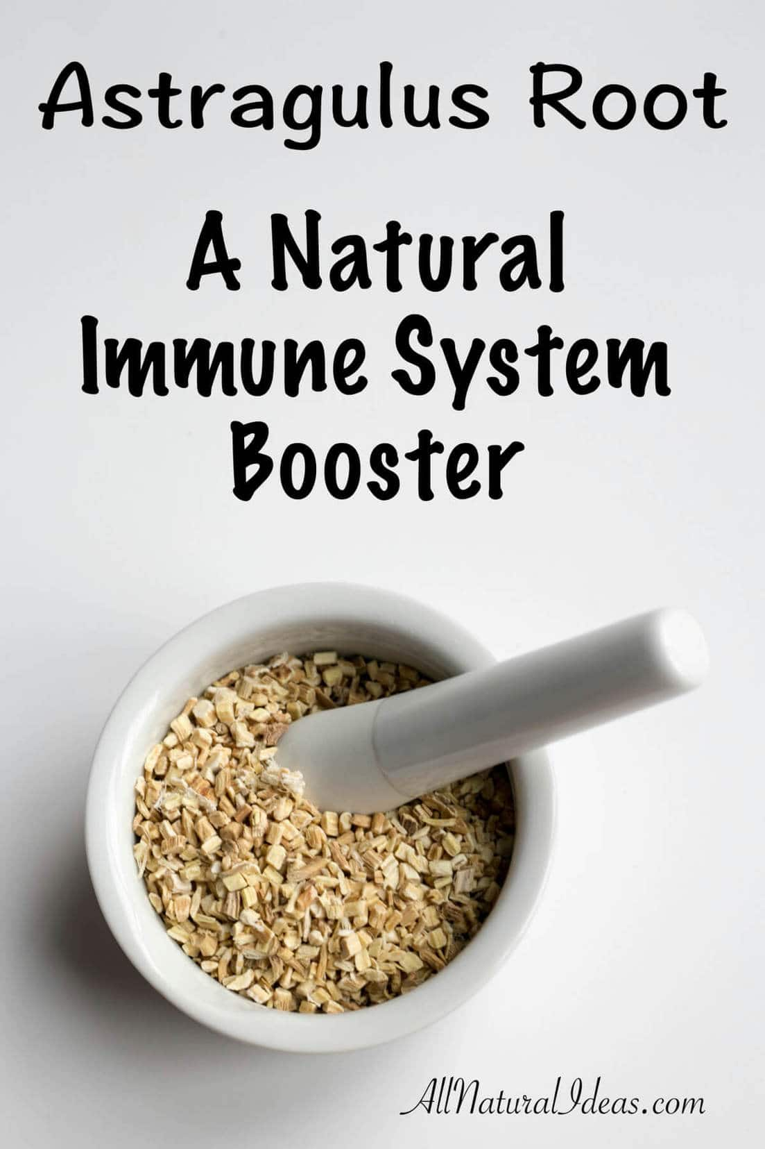 Looking for a natural immune system booster? Want to fight off the cold and flu? Consider using astragalus root to keep your immune system strong!