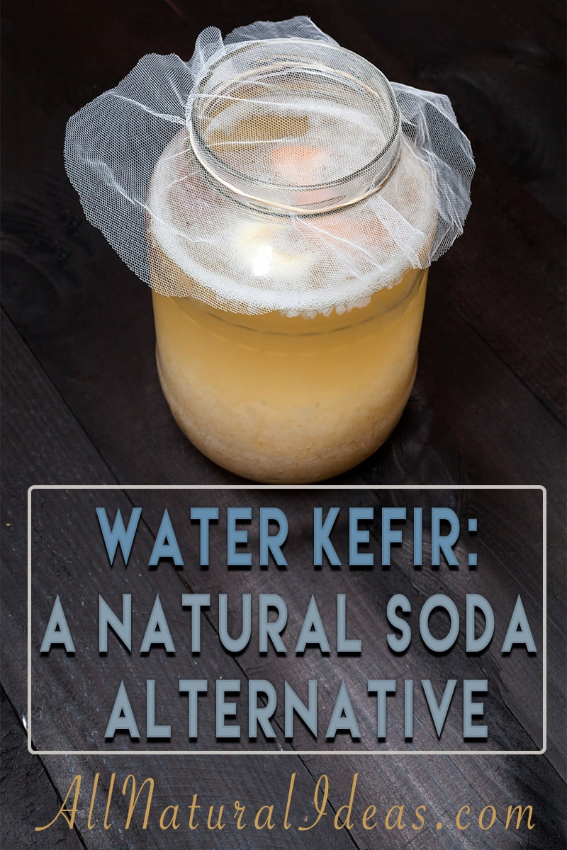 Are you looking for a natural alternative to soda? Try water kefir! It contains significantly less sugar and is loaded with probiotics! | allnaturalideas.com