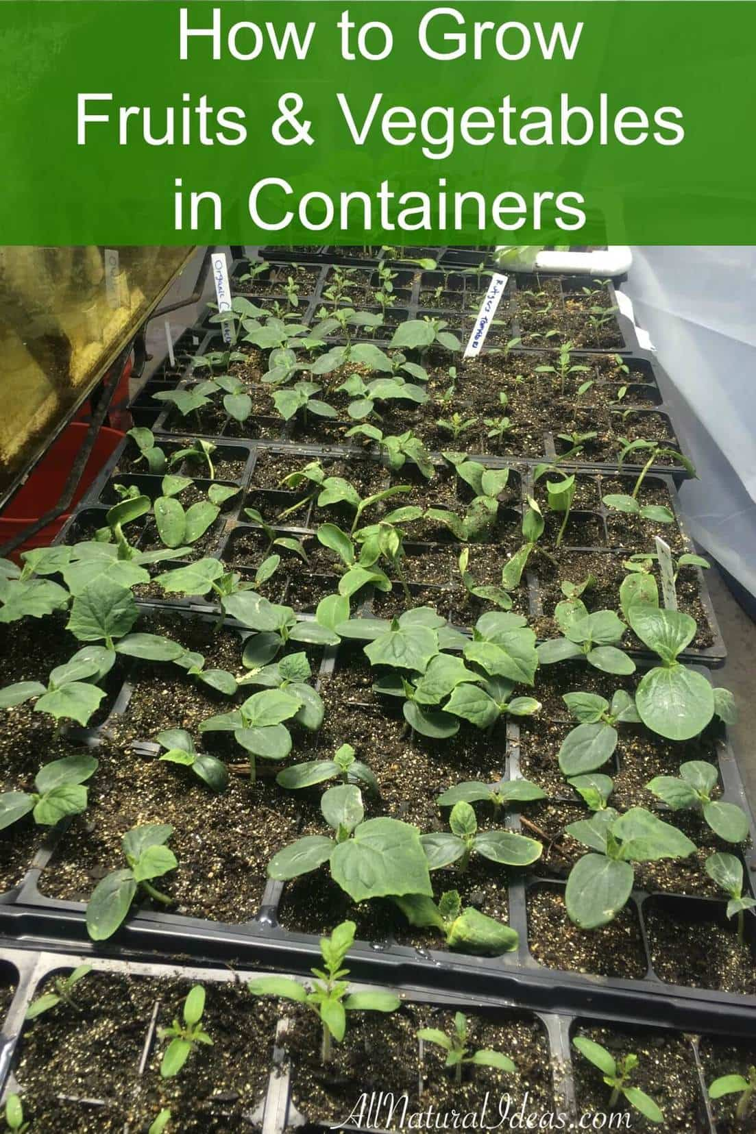 How to grow fruits and vegetables in containers