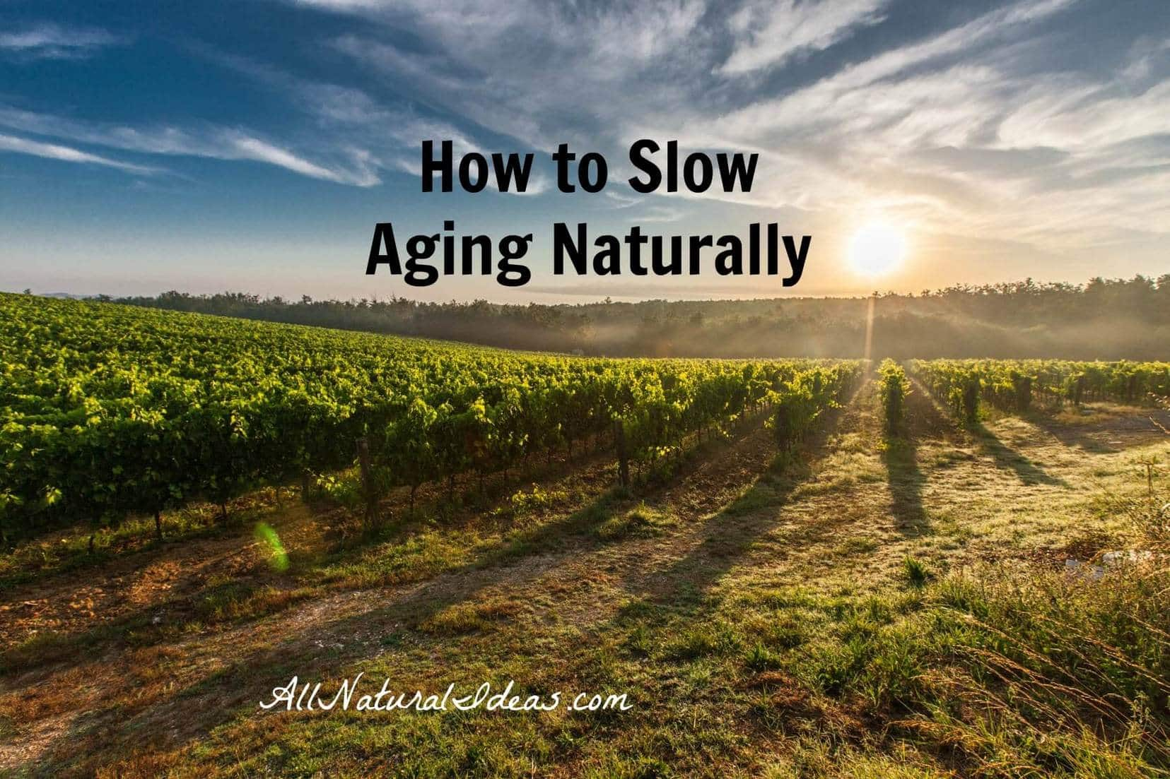 Slow aging naturally