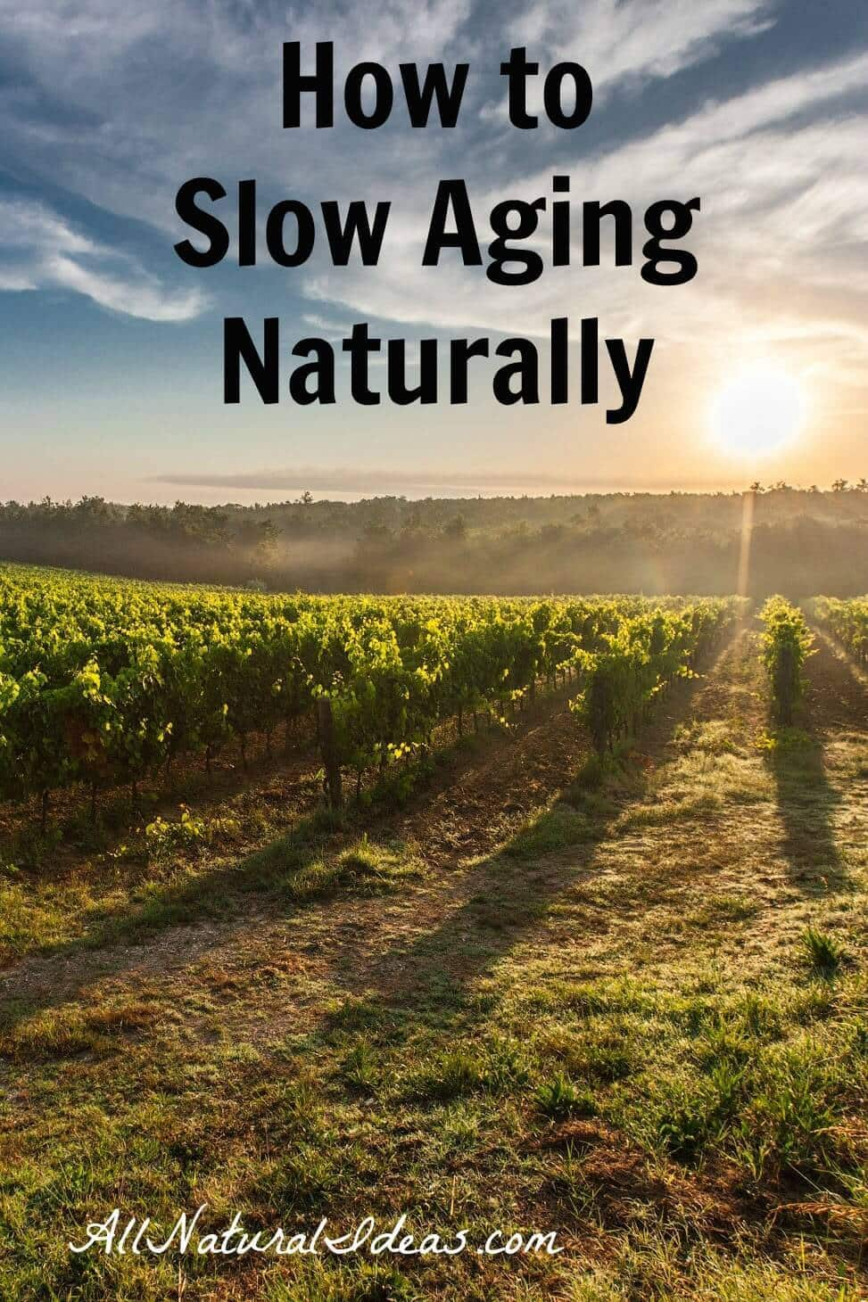 Getting tired of feeling old? Is age taking a toll on your physical and mental health? Learn how to slow aging naturally to feel young again!