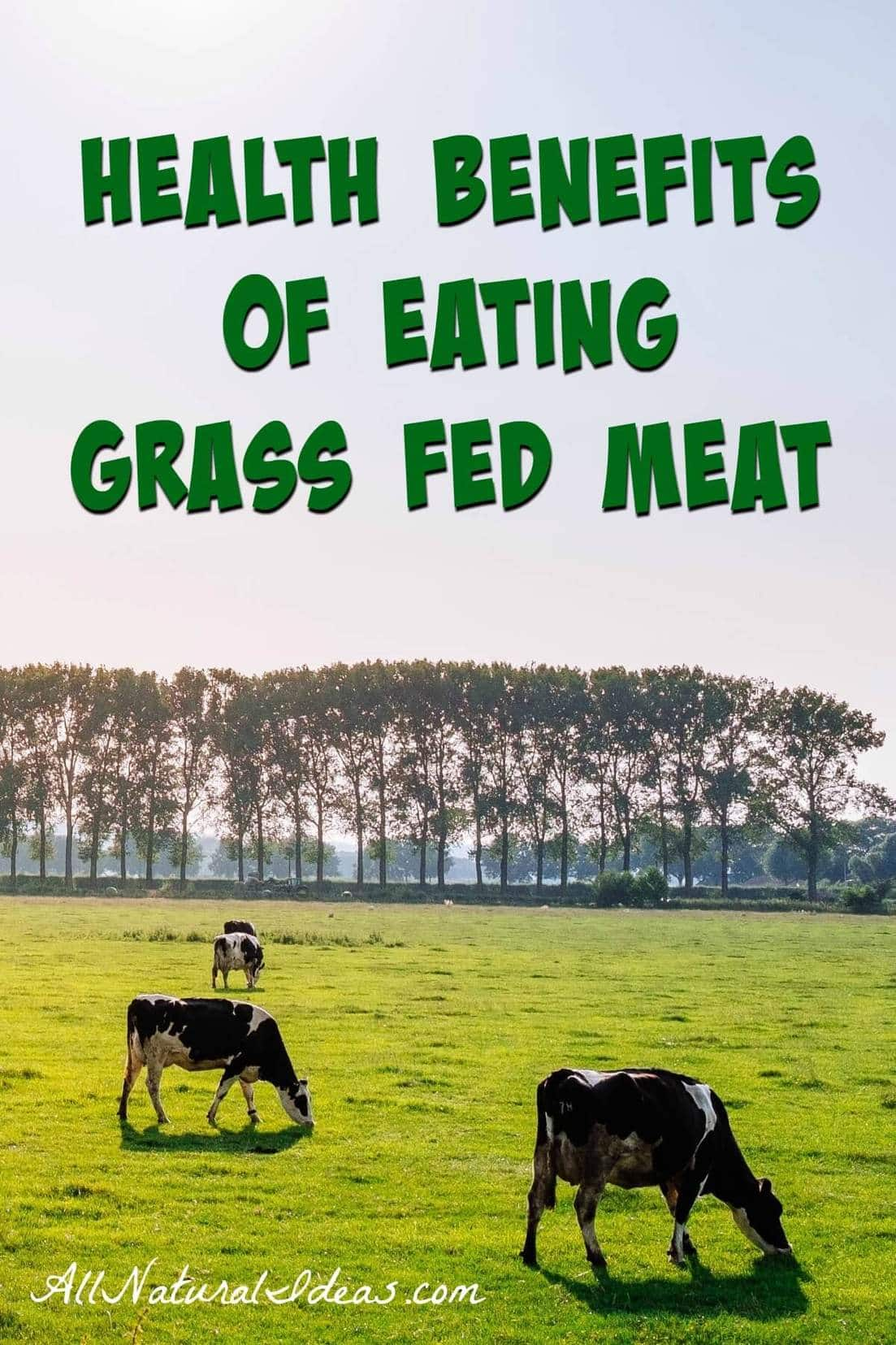 Grass fed meat costs much more than grain fed. Is the expense worth it? Let take a look at the grass fed meat health benefits and why it is worth the cost. | allnaturalideas.com