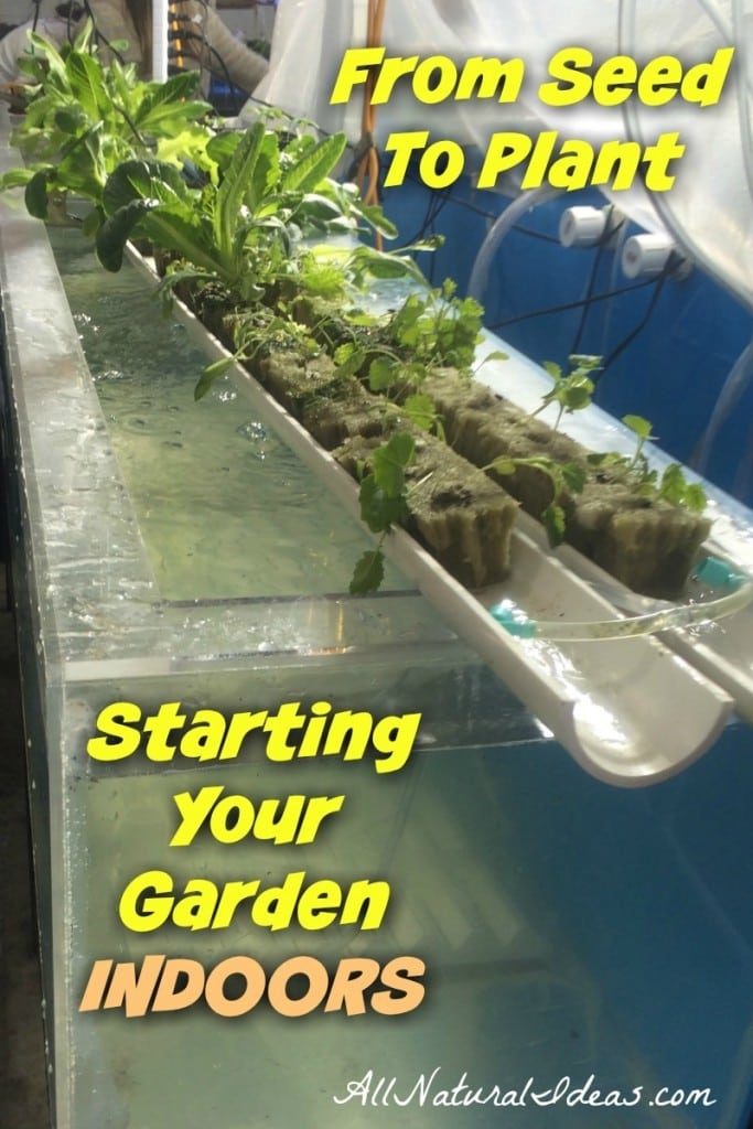 From seed to plant starting your garden indoors all natural ideas looking to grow your plants indoor this year want to get from seed to plant workwithnaturefo