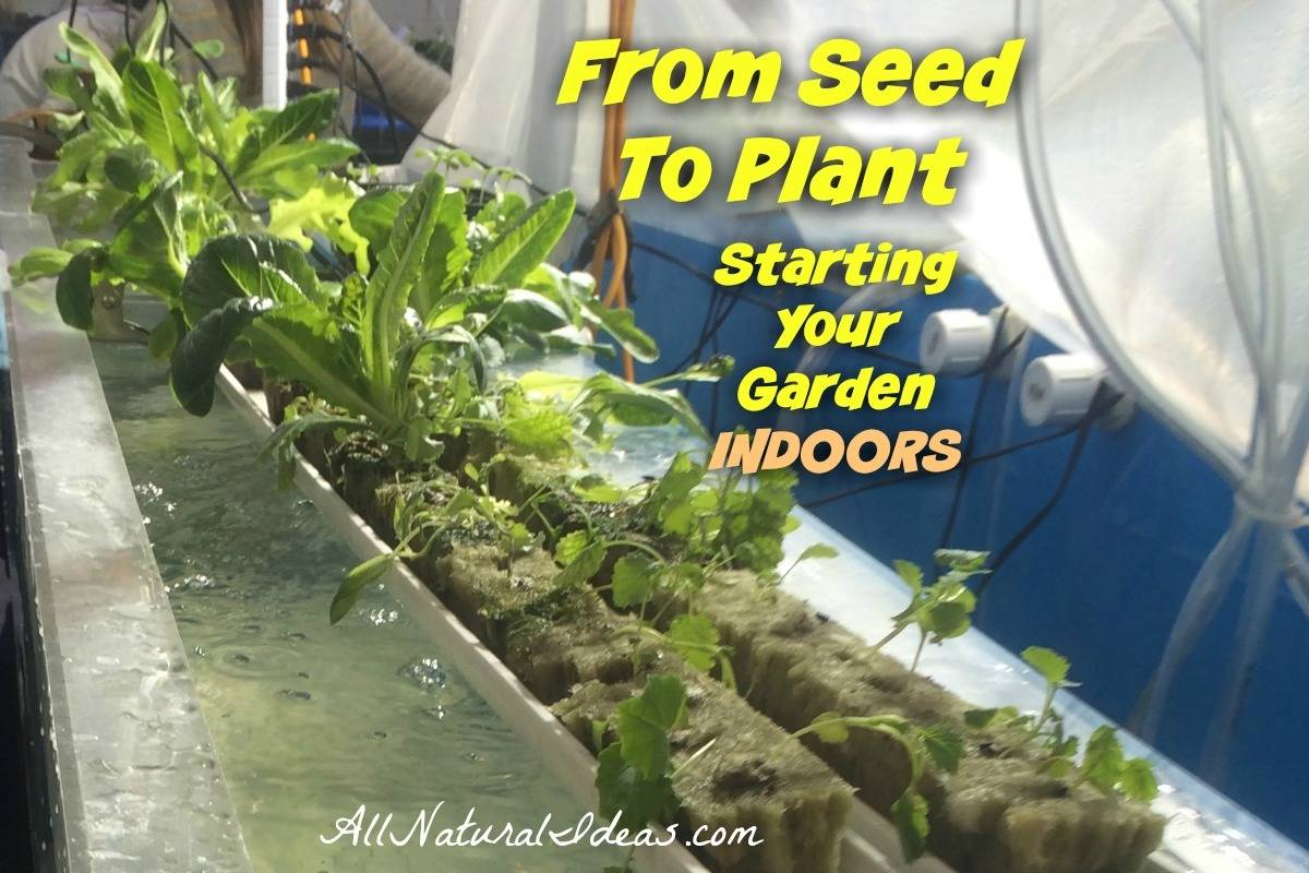 From seeds to plants: starting your garden indoors | allnaturalideas.com