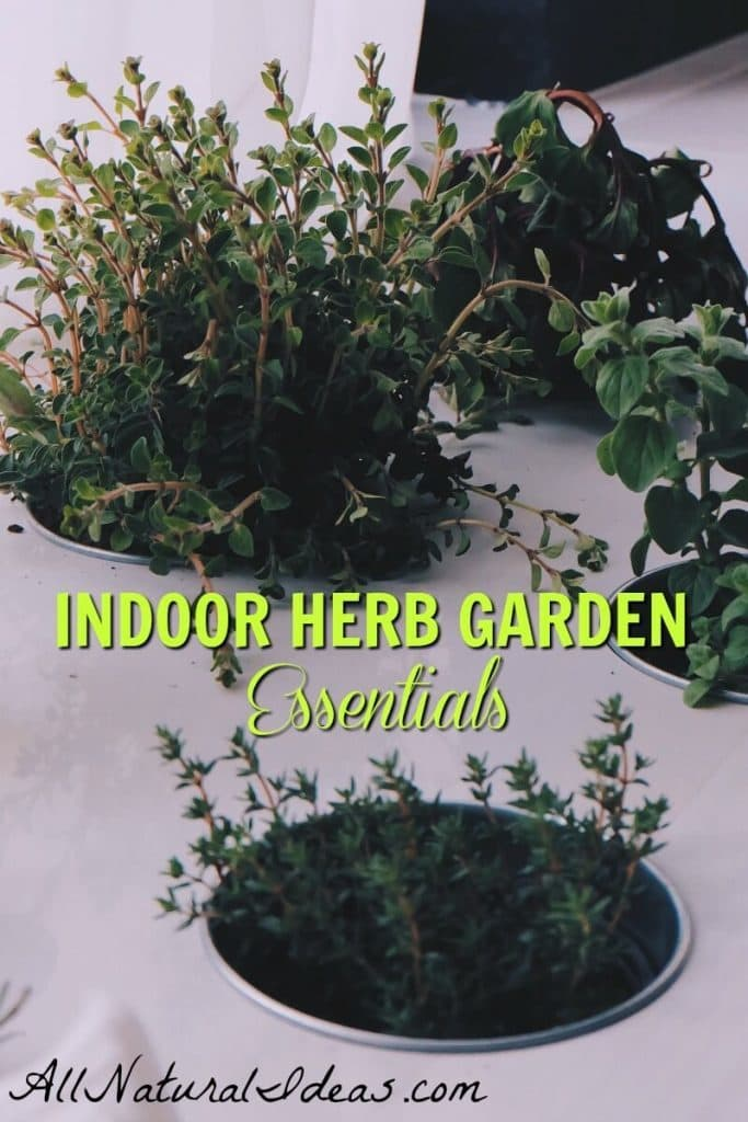 Looking to have your own fresh herbs? Don't have any outdoor space? Try making an indoor herb garden on your windowsill to fulfill your herb needs! allnaturalideas.com