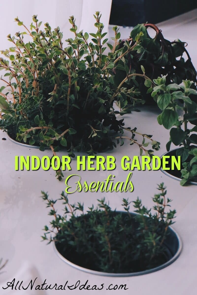 Looking to have your own fresh herbs? Don't have any outdoor space? Try making an indoor herb garden on your windowsill to fulfill your herb needs! | allnaturalideas.com
