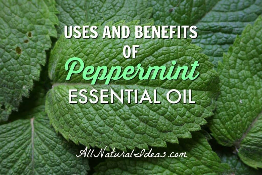 There are many peppermint essential oil uses and benefits. Find out why this popular oil needs to be part of your collection. | allnaturalideas.com