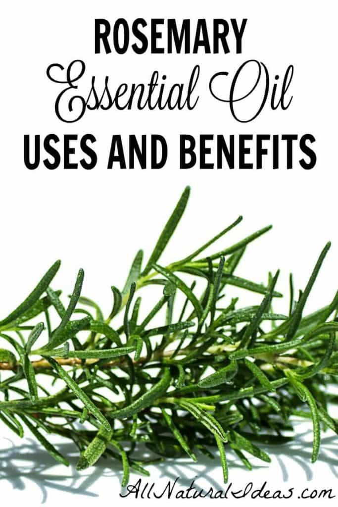 Rosemary is a popular essential oil. You may want to give it a try. There are some great rosemary essential oil uses and benefits. | allnaturalideas.com