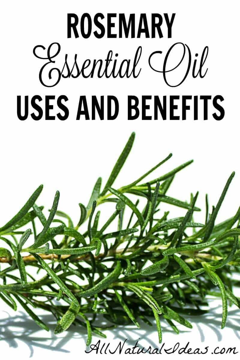 Rosemary is a popular essential oil. You may want to give it a try. There are some great rosemary essential oil uses and benefits.   allnaturalideas.com