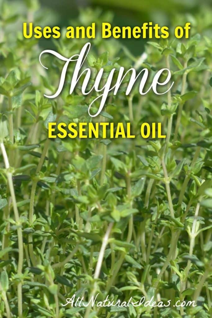 Thyme Essential Oil Uses And Benefits All Natural Ideas
