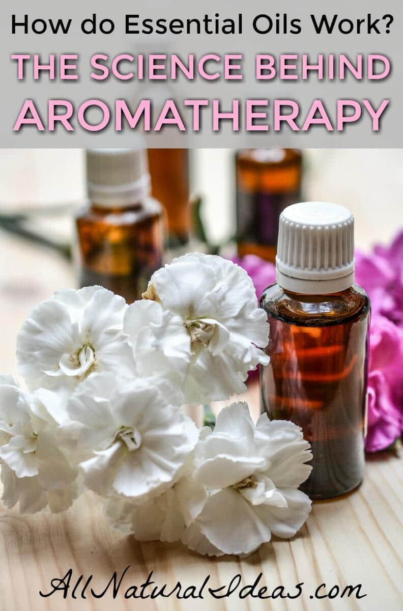 Lots of research has been done on essential oils and how they are thought to work. Studies on aromatherapy science have proven the therapeutic benefits.   allnaturalideas.com