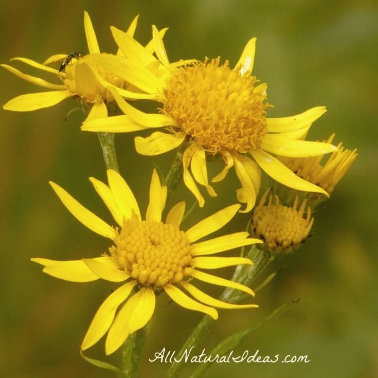 Natural Medicine Cabinet Essentials