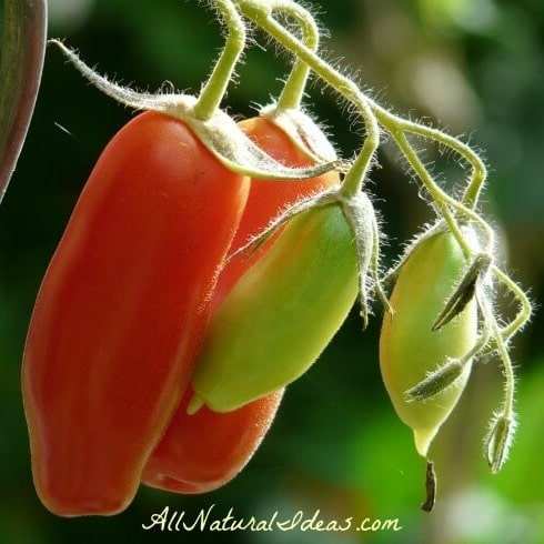Nightshade Vegetables and Arthritis: Is there a Link?