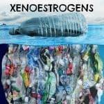 Xenoestrogens list