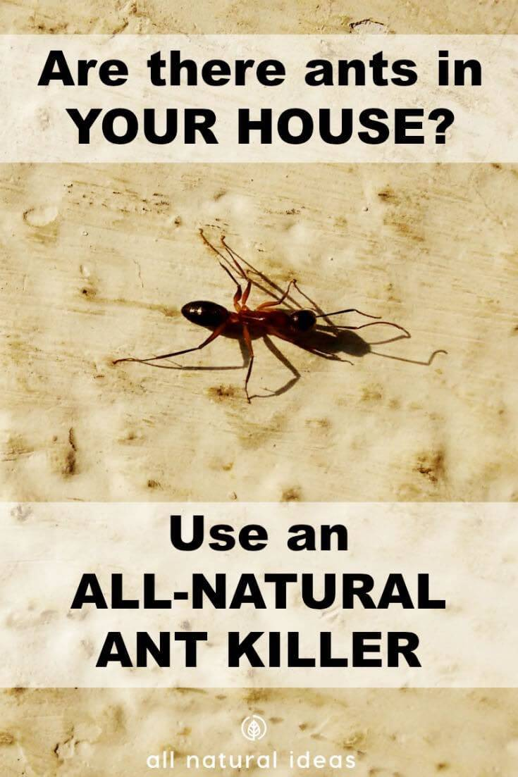 All natural ant killer indoors cover