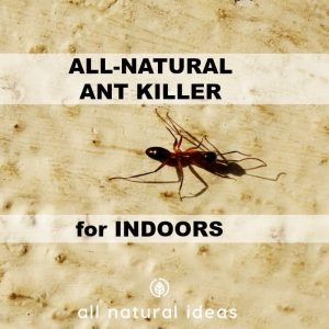 All natural ant killer indoors square