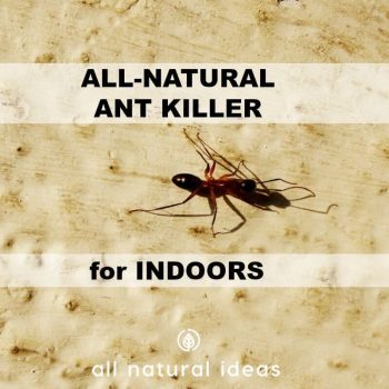 How to Use an All Natural Ant Killer Indoors