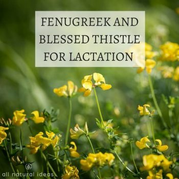 Fenugreek and blessed thistle for lactation