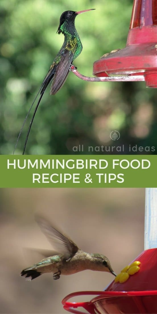 An easy hummingbird food recipe that's easy to make at home. With these tips, it's simple to attract the birds and make them stick around. | allnaturalideas.com