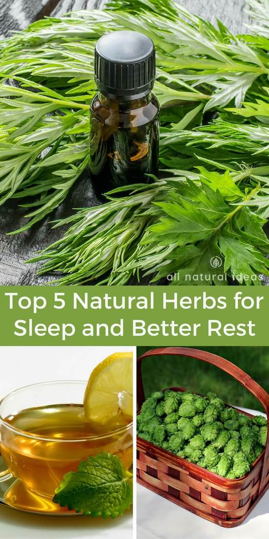 There are a variety of natural herbs for sleep that people take to get better rest. Discover the top herbal remedies that help with insomnia. | allnaturalideas.com