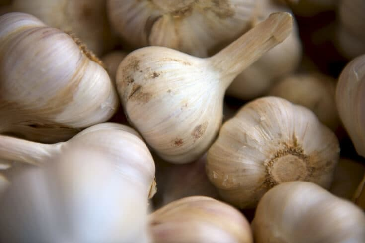 How to get rid of ringworm fast - garlic