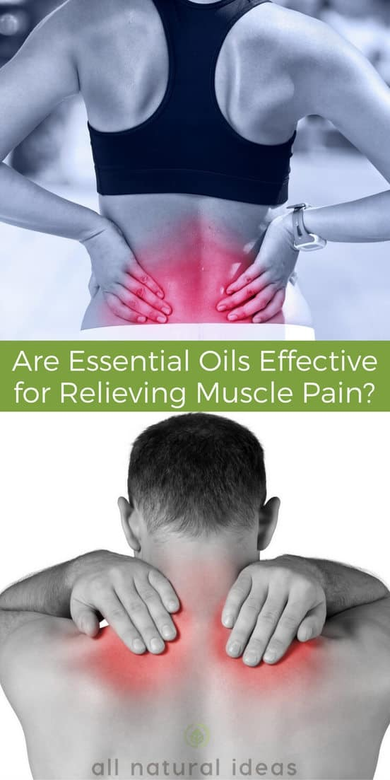 Using essential oils for muscle pain have a proven track record. Not just in alternative therapy circles, but also in science based research studies. #essentialoils #naturalremedy | allnaturalideas.com