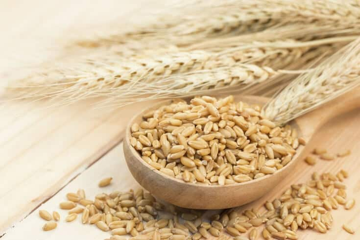 Is beta glucan cancer prevention effective?
