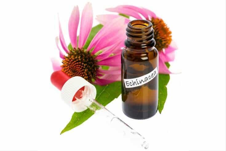 Echinacea tincture uses