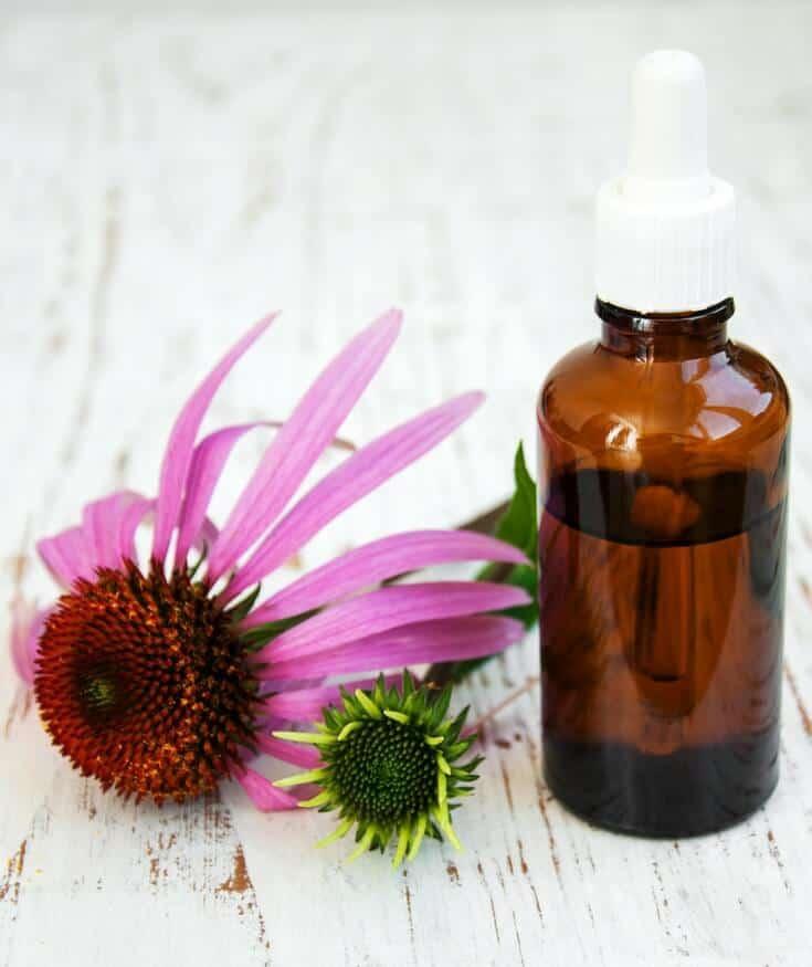 Echinacea tincture recipe