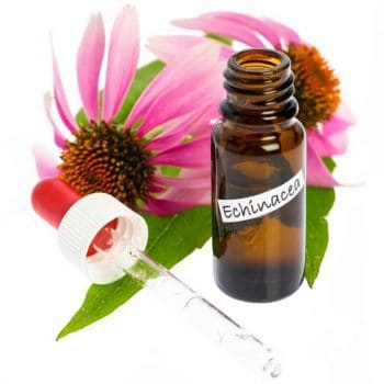 Echinacea Tincture: Effective Cold Killer or Hoax?