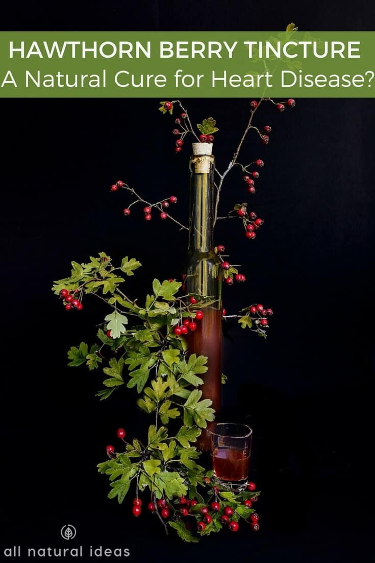 Hawthorn berry tincture - A Natural Cure for Heart Disease?
