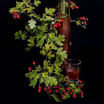 Hawthorn Berry Tincture: A Cure for Heart Disease?