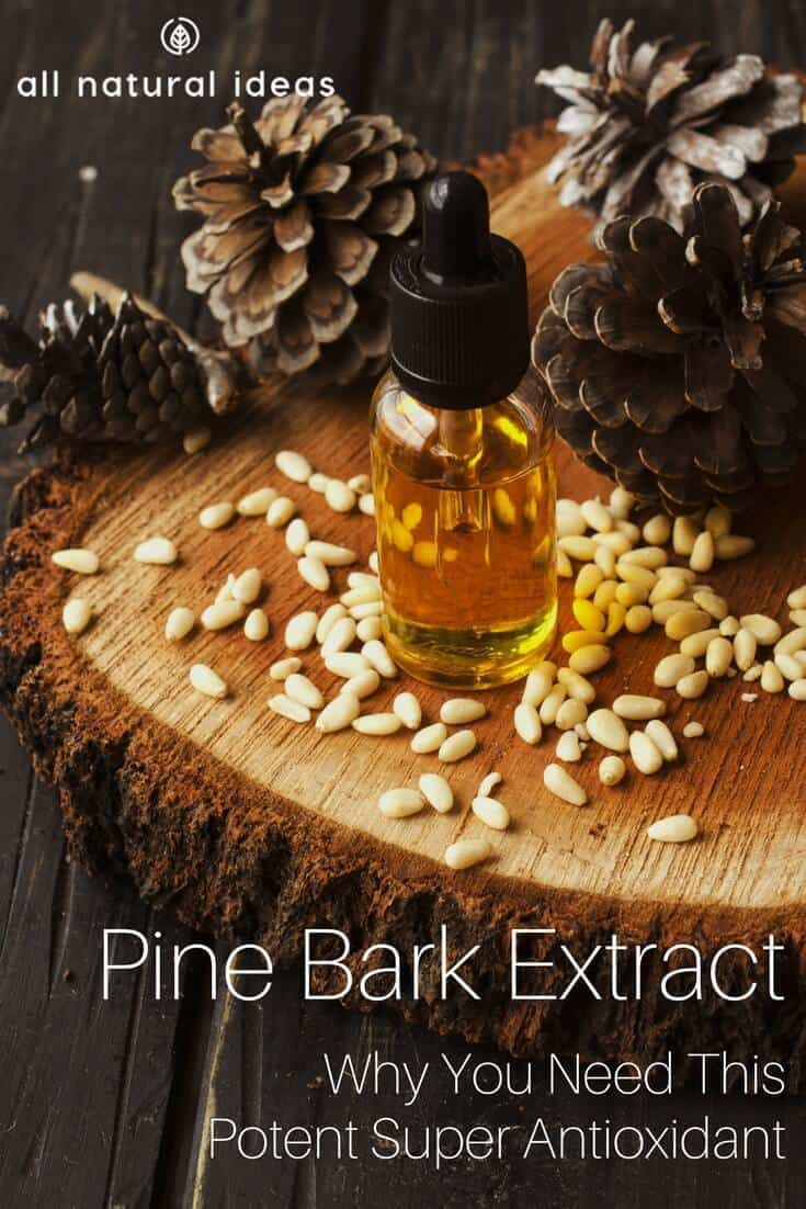 Pine bark extract might just be one of the most powerful antioxidants on the planet. Learn about its health benefits and why not all extracts are equal.