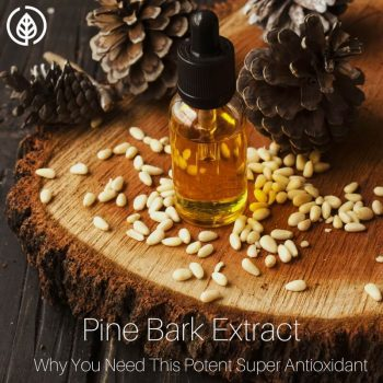 Amazing Pine Bark Extract Benefits You Need to Know