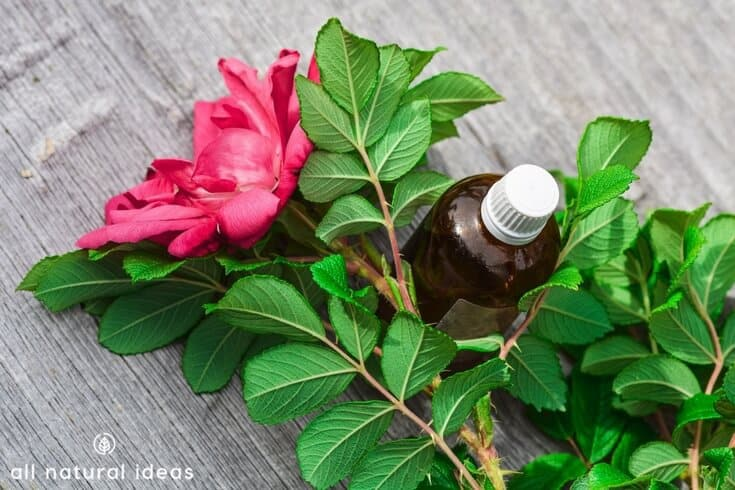 Blood pressure lowering drugs come with many side effects so people often look for alternative treatments. Here's 11 useful essential oils for high blood pressure.