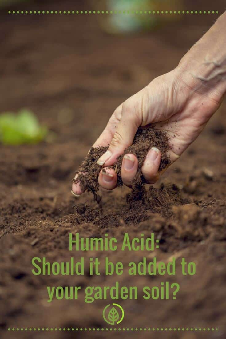 Love to get your hands dirty in the soil? If you're not familiar with humic acid, get to know it. It's like a natural steroid for plant growth. And it works by promoting hormone activity in plants. Here's more info on humic acid, especially its benefits for plants.