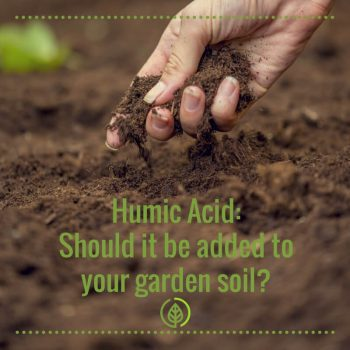 Humic Acid: Add it to your soil for maximum yield
