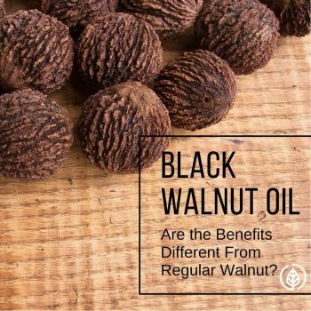 Black walnuts; they may even be better for your health than regular walnuts.